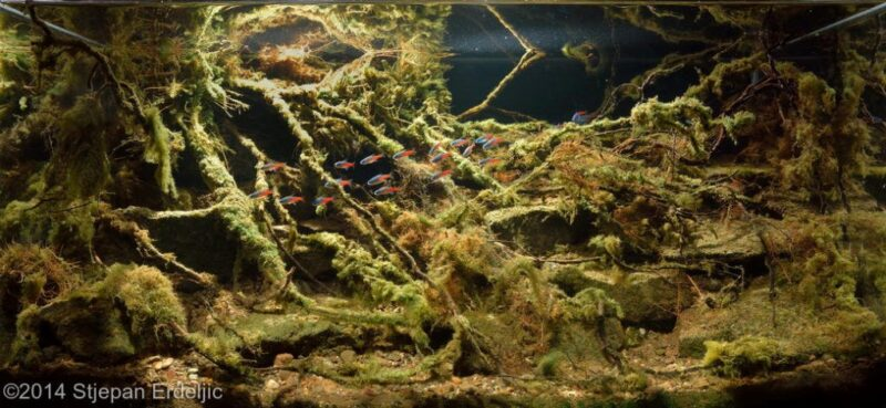 Biotoop style aquascaping